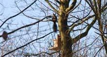 Eichhörnchen Futterstelle